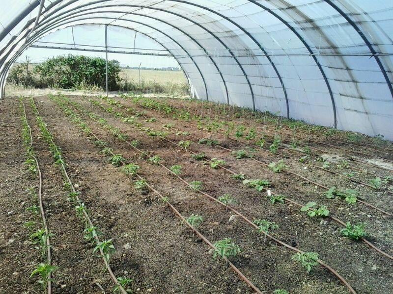 Ya hemos comenzado el curso de «Agricultura Ecológica» de 450 horas. La próxima edición en Septiembre