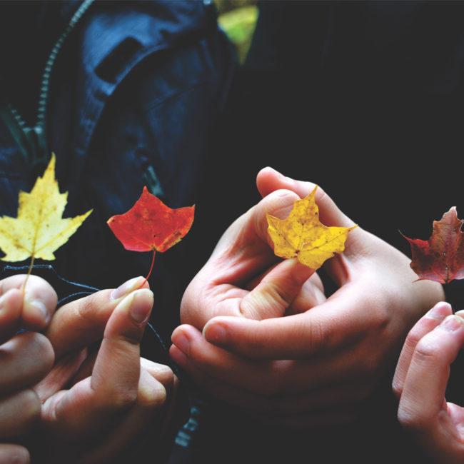 Programa de fortalecimiento y desarrollo de la convivencia escolar, emocional  y social, tolerante e igualitaria.