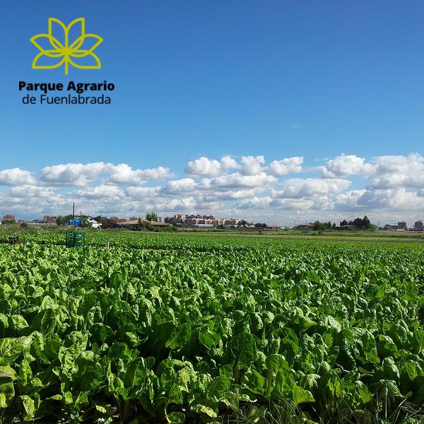 Parque agrario de Fuenlabrada