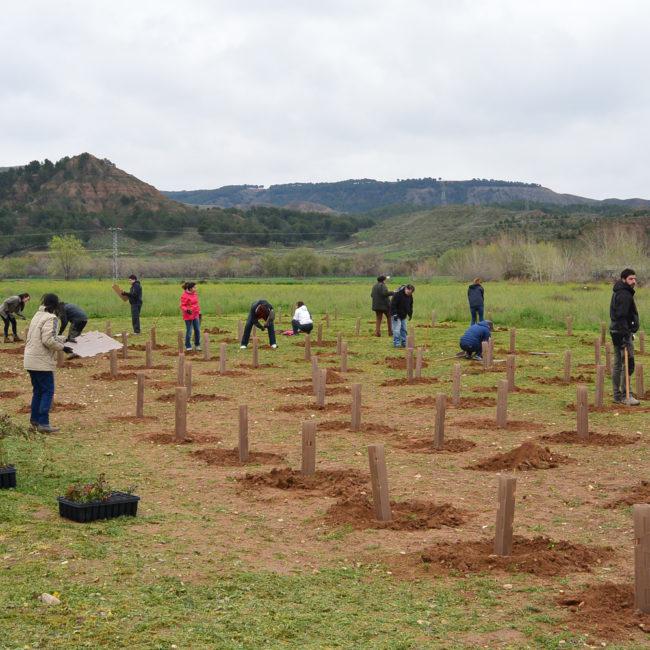Plantación del Bosque Comestible, en Alcalá de Henares (Madrid). Año 2017