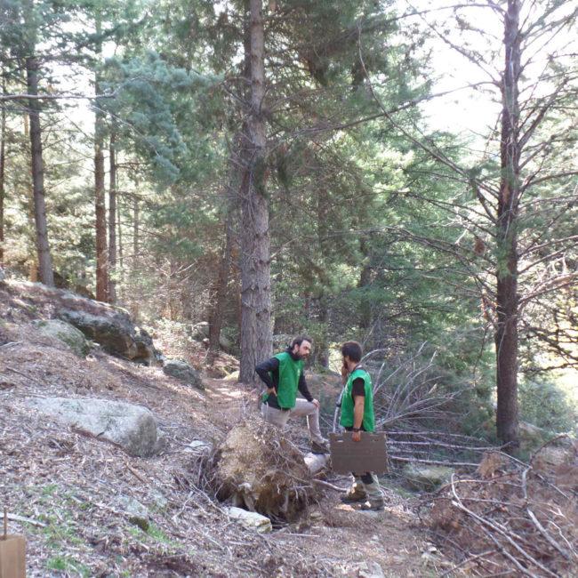 Reforestación del Bosque Mediterráneo del Parque de la Pedriza