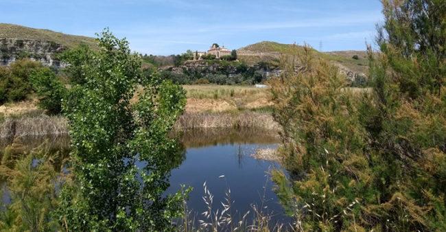 Coordinación y gestión del Parque Agroecologico del Soto del Grillo Rivas - Heliconia
