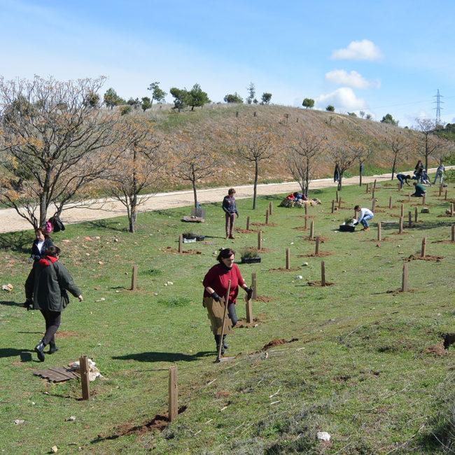 Diversificación florística del Parque de los Cerros, en Alcalá de Henares (Madrid). Año 2017