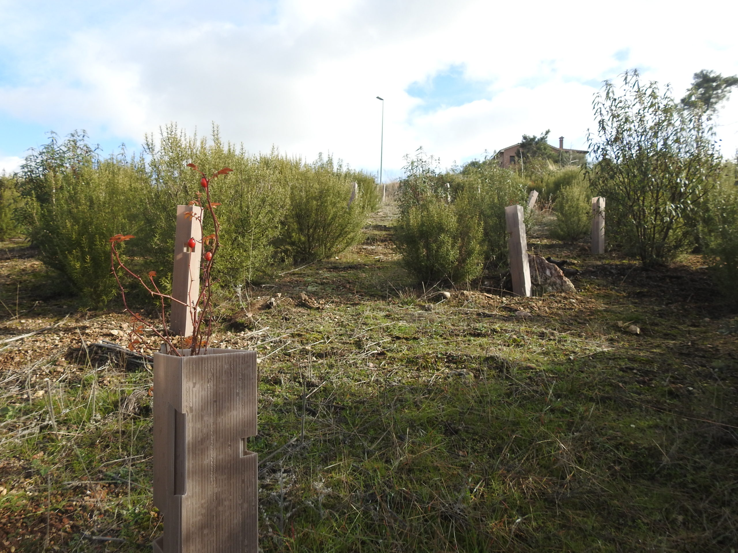 Voluntariado ambiental reforestación plantas autóctonas