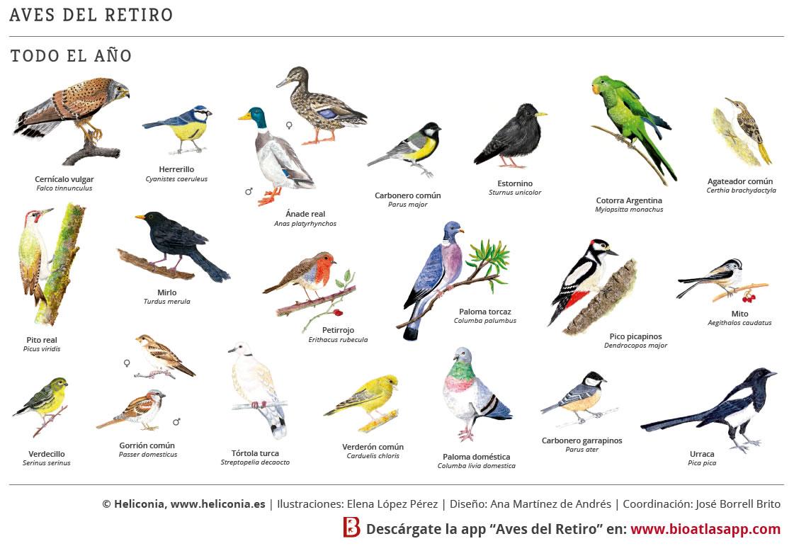 Aves del Parque del Retiro de Madrid Heliconia
