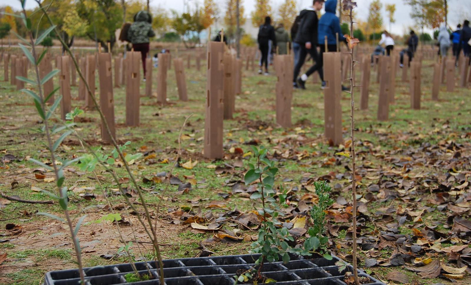 Reforestación, plantaciónde árboles en bosques y parques periurbanos